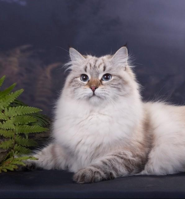 Очень статная кошка