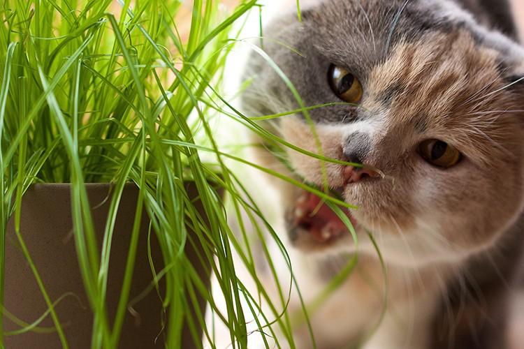Зелень для животных полезна