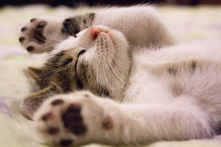 Своенравные котята временами кусают хозяев острыми зубками