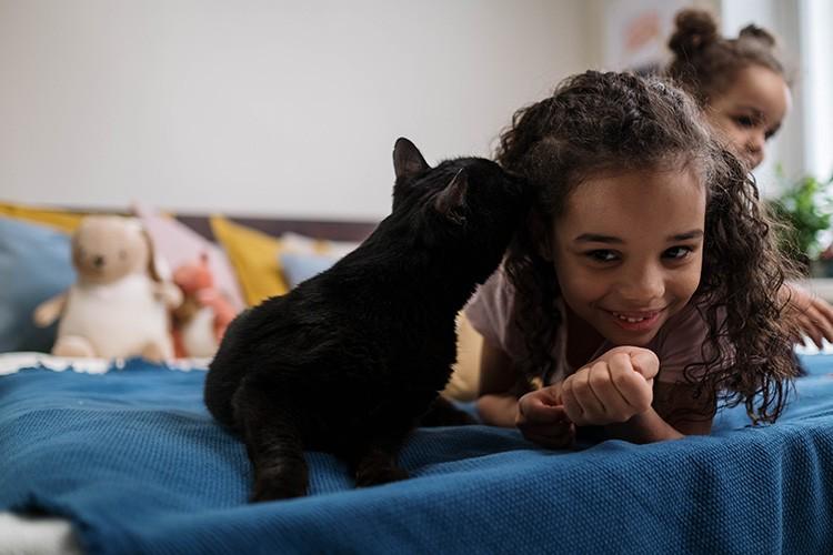 Тельцы обожают кошек, считают их самыми прекрасными созданиями на планете