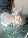 Продаю кроликов Москва