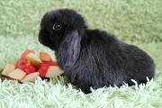 Продажа карликовых крольчат из питомника Москва