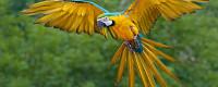 Элитпопугай -  ручные птенцы  из питомников Европы
